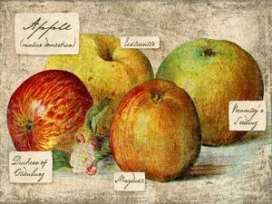 Apple by Kate Ward Thacker