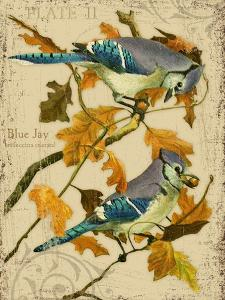 Blue Jay by Kate Ward Thacker