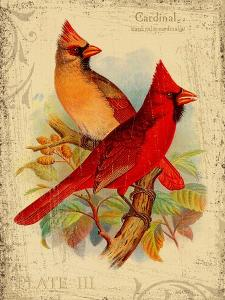 Cardinal by Kate Ward Thacker