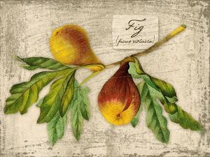 Fig by Kate Ward Thacker