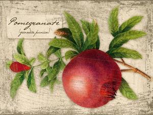 Pomegranate by Kate Ward Thacker