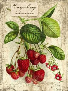 Raspberry by Kate Ward Thacker