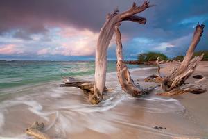 Driftwood Sunset by Katherine Gendreau