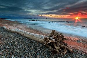 Sakonnet Driftwood by Katherine Gendreau