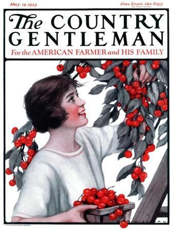 """""""Picking Pints of Cherries,"""" Country Gentleman Cover, May 19, 1923 by Katherine R^ Wireman"""