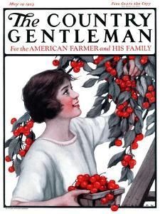 """Picking Pints of Cherries,"" Country Gentleman Cover, May 19, 1923 by Katherine R^ Wireman"