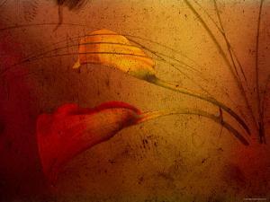 Callas by Katherine Sanderson