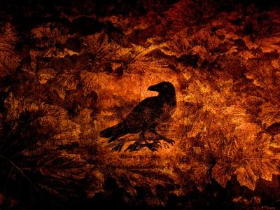 Raven in the Acanthus