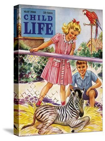 Baby Zebra - Child Life, May 1946