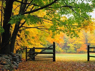Fall Foliage Surrounds an Open Gate