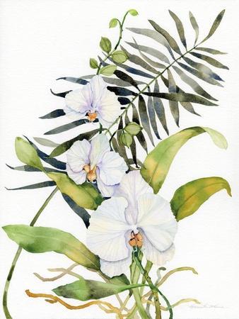 Botanical Phalaenopsis