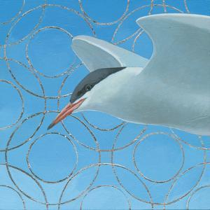 Common Tern by Kathrine Lovell