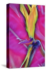 Odd Bird by Kathy Carbonetti