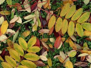 Overhead View of Autumn Leaves on the Ground by Kathy Collins