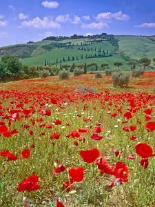 Val D'orcia Tuscany Itlay by Kathy Collins