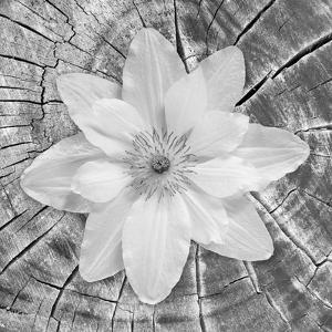 Bloom II by Kathy Mahan