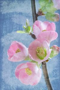 Flowering Quince I by Kathy Mahan