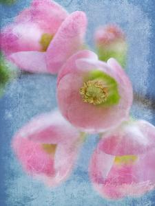 Flowering Quince II by Kathy Mahan
