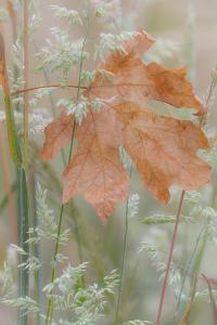 Leaf in Meadow by Kathy Mahan