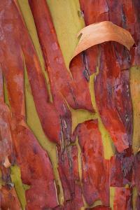 Madrona Bark I by Kathy Mahan