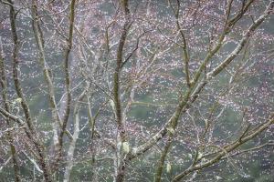 Sparkling Raindrops II by Kathy Mahan