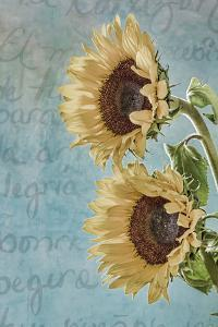Sunflowers II by Kathy Mahan