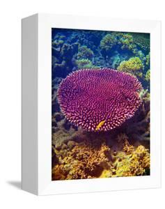 Barrier Reef Coral II by Kathy Mansfield
