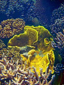 Barrier Reef Coral III by Kathy Mansfield