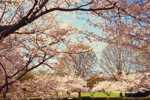 Blossom Beauty I by Kathy Mansfield