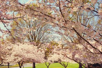 Blossom Beauty II