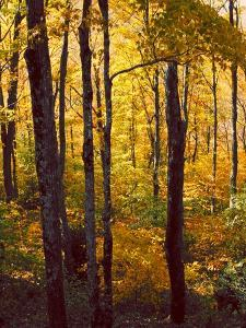 Sanctuary Woods I by Kathy Mansfield