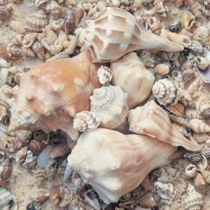 Shell Collection I by Kathy Mansfield