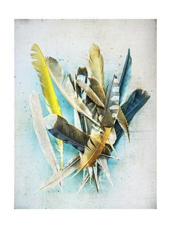 Feather Study No. 1