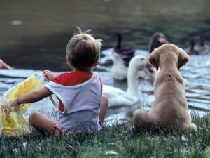 Little Boy and Puppy Looking at Ducks in Pond by Katie Deits