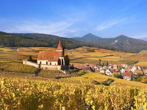 The Vineyards at Hunawihr, Alsace, France by Katja Kreder