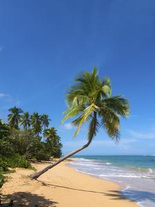 Tres Palmitas Beach, Loiza, Puerto Rico by Katja Kreder
