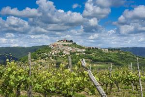 Vineyards, Motovun, Istria, Croatia by Katja Kreder