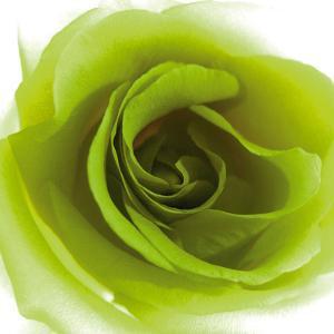 Green Summer Petals by Katja Marzahn