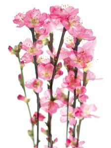 In Blossom by Katja Marzahn