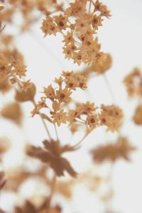 Les Memories Taupe by Katja Marzahn