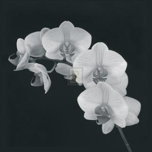 Orchid Illusion II by Katja Marzahn