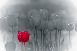 Tulip Accent by Katja Marzahn