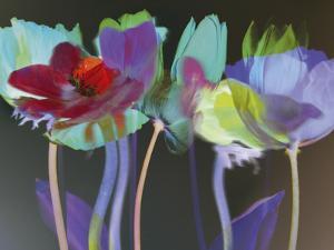 Tulip Blaze by Katja Marzahn