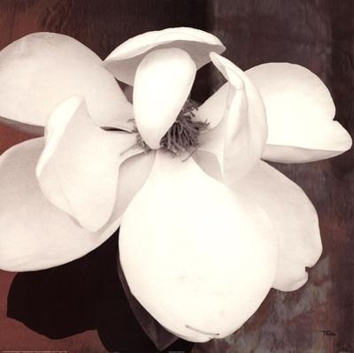 Magnolia Blue II