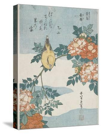 Black-Naped Oriole and China Rose, C. 1833
