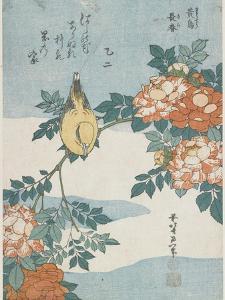 Black-Naped Oriole and China Rose, C. 1833 by Katsushika Hokusai