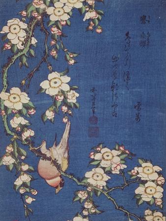 Bullfinch and weeping cherry-tree, pub. c.1834 by Katsushika Hokusai