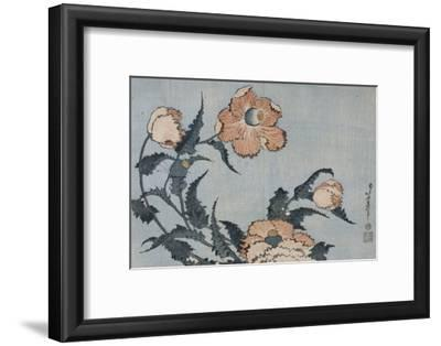 Fleurs de pavot dans la brise