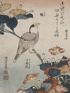Gros-bec et mirabilis by Katsushika Hokusai