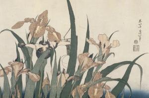 Iris et sauterelle by Katsushika Hokusai